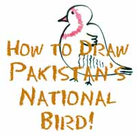 How to Draw Pakistan's National Bird