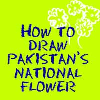 How to Draw Pakistan's National Flower, the Jasmine